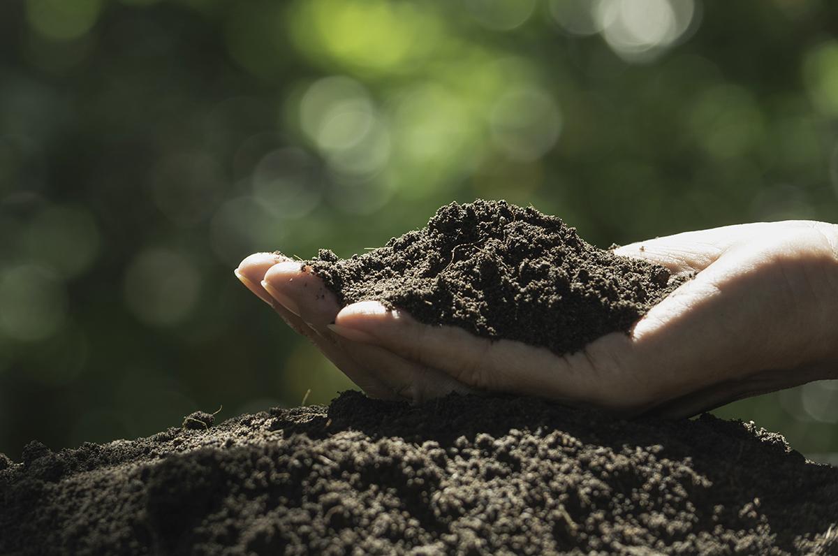 Der Alleskönner Kompost - zur Naturdüngung & Bodenverbesserung (Humusaufbau), für Garten- & Gemüsebau